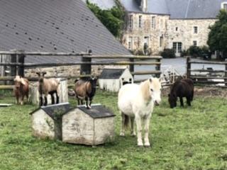 La Vieille Abbaye - Découvrez nos animaux